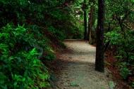"""""""Hiking"""" by Luke Wisley"""